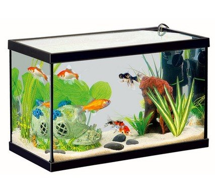 aquarium quip pour poissons d eau froide 20 litres 40x20x25cm zolux aquatica plus france. Black Bedroom Furniture Sets. Home Design Ideas